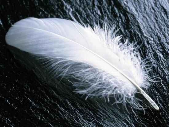 Ángel de la guarda - Pluma blanca