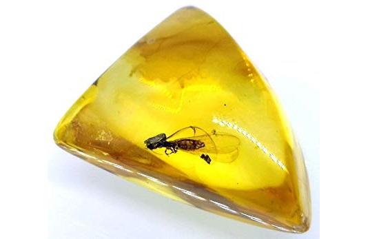 Piedra ámbar con un insecto en su interior
